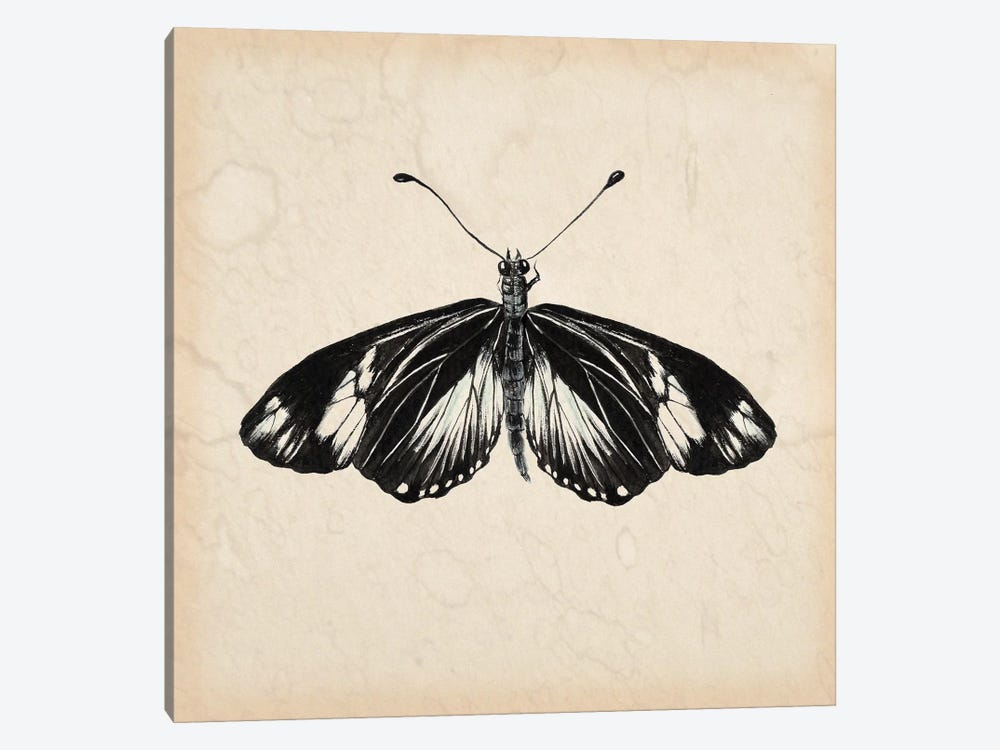 Butterfly Study VI by Melissa Wang 1-piece Art Print