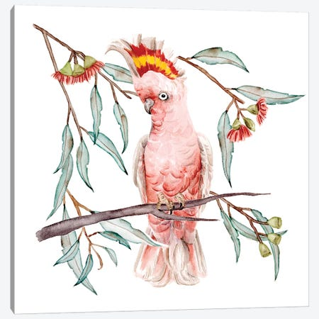 Pink Cockatoo I Canvas Print #WNG1139} by Melissa Wang Canvas Wall Art