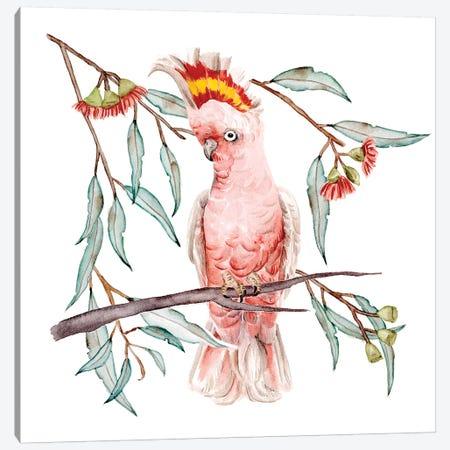 Pink Cockatoo I Canvas Print #WNG1139} by Melissa Wang Canvas Wall Art