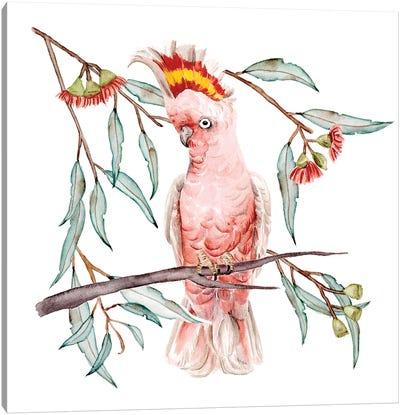 Pink Cockatoo I Canvas Art Print