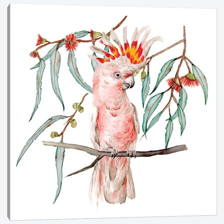 Pink Cockatoo II Canvas Print #WNG1140} by Melissa Wang Canvas Print