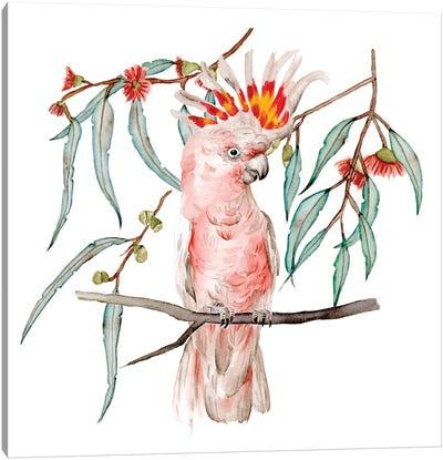 Pink Cockatoo II Canvas Art Print