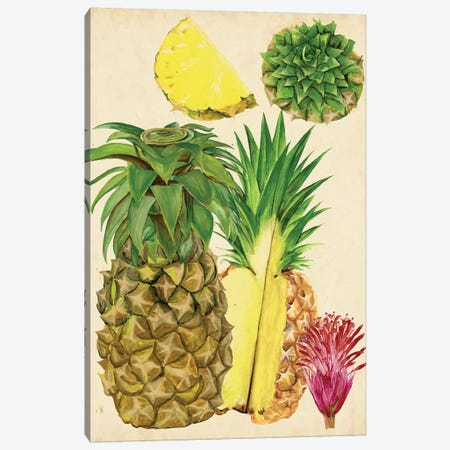 Tropical Pineapple Study I Canvas Print #WNG121} by Melissa Wang Canvas Art Print