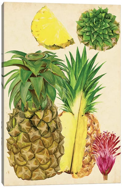 Tropical Pineapple Study I Canvas Art Print