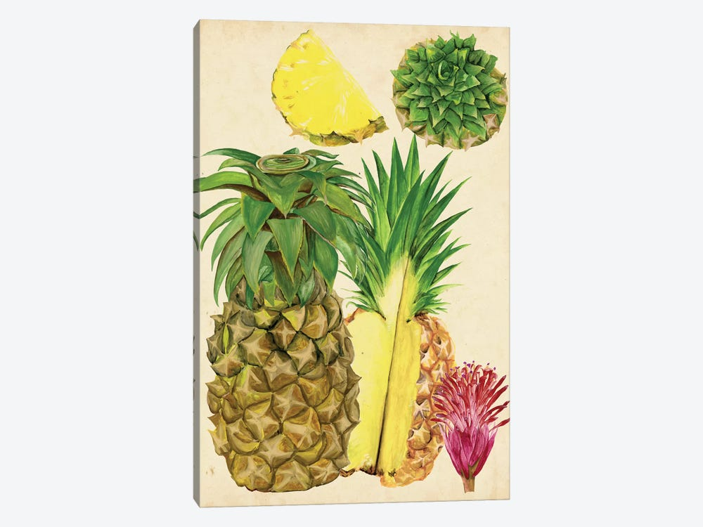Tropical Pineapple Study I by Melissa Wang 1-piece Canvas Art Print