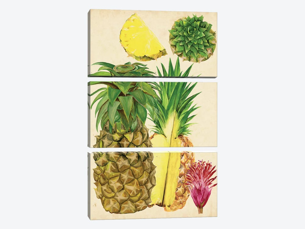 Tropical Pineapple Study I by Melissa Wang 3-piece Art Print