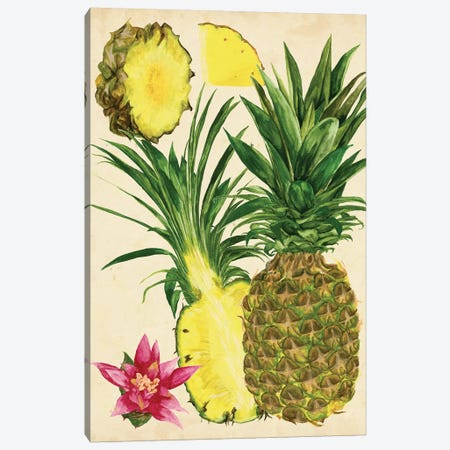 Tropical Pineapple Study II Canvas Print #WNG122} by Melissa Wang Art Print