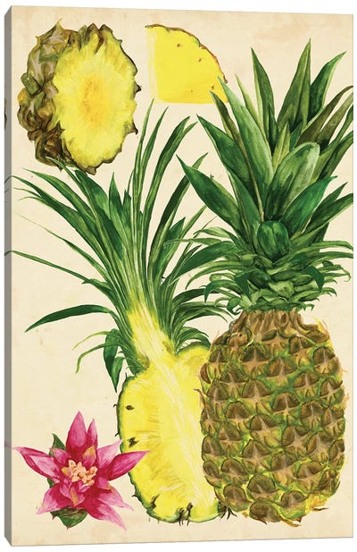 Tropical Pineapple Study II Canvas Art Print