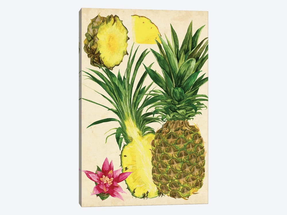 Tropical Pineapple Study II by Melissa Wang 1-piece Canvas Wall Art