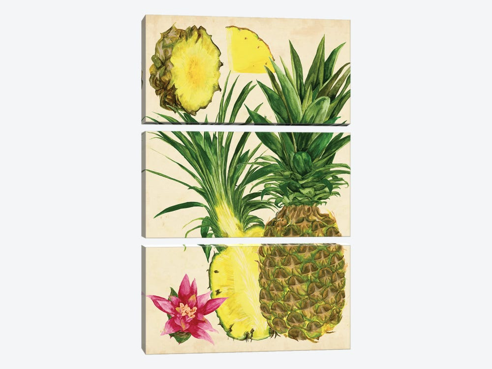 Tropical Pineapple Study II 3-piece Canvas Art