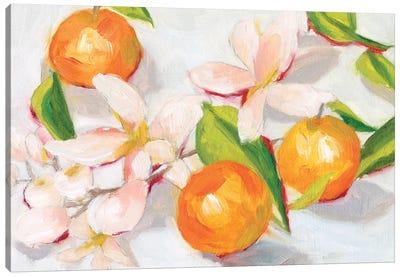 Tangerine Blossoms II Canvas Art Print
