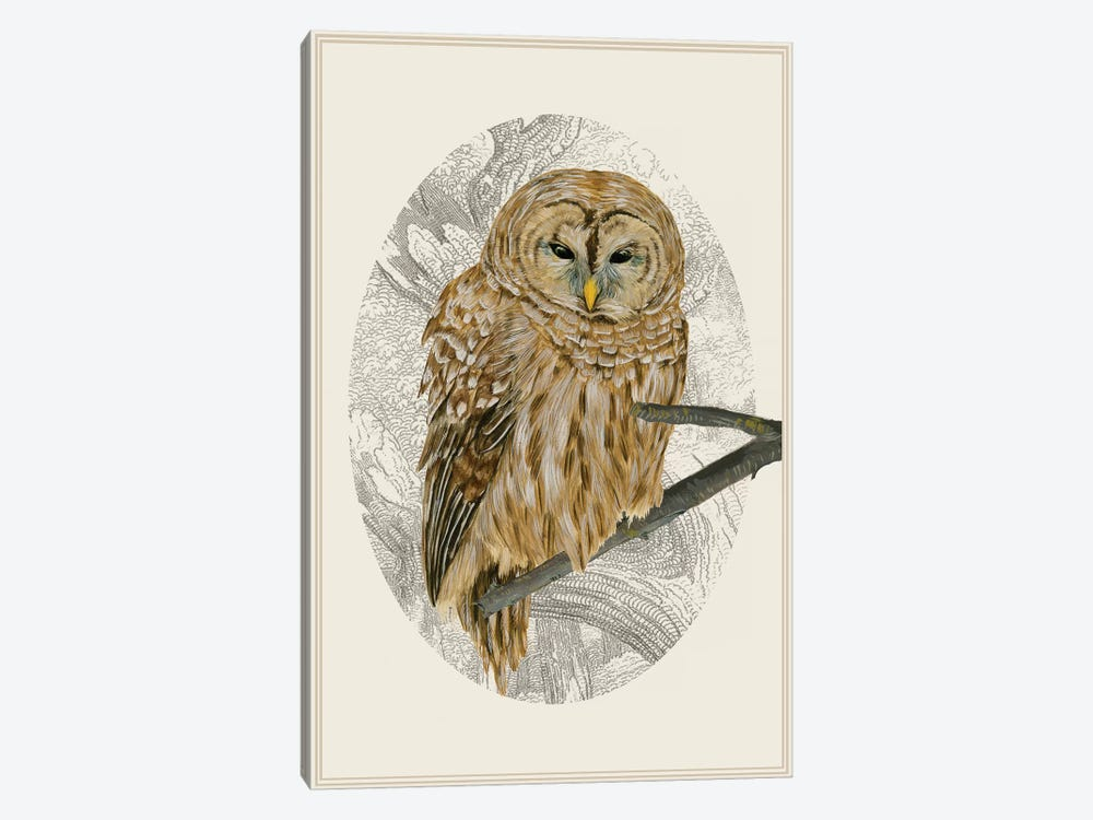 Barred Owl I by Melissa Wang 1-piece Canvas Art Print