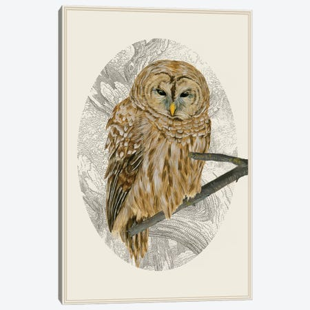 Barred Owl I Canvas Print #WNG127} by Melissa Wang Canvas Art