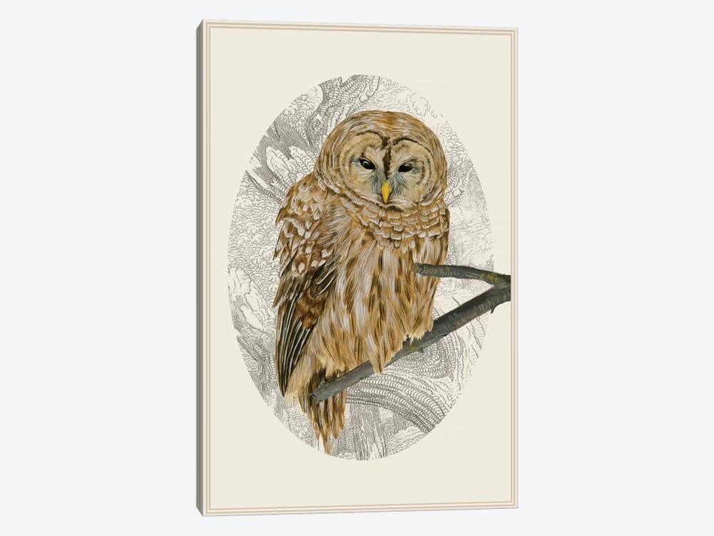 Barred Owl I by Melissa Wang 1-piece Canvas Art Print