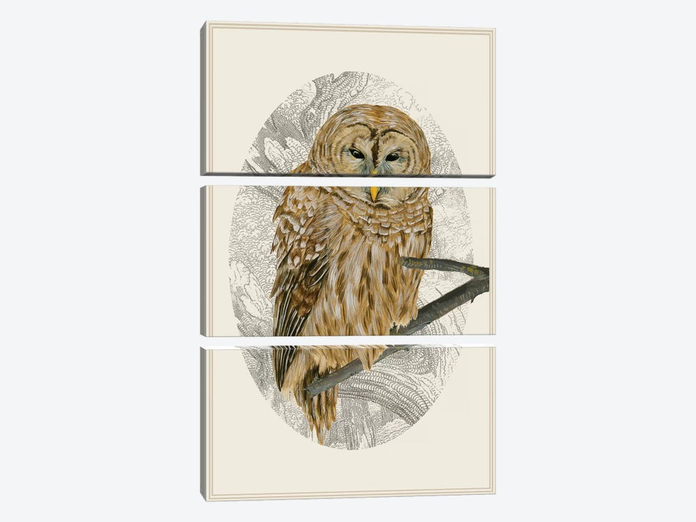 Barred Owl I by Melissa Wang 3-piece Canvas Print