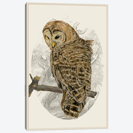 Barred Owl II Canvas Print #WNG128} by Melissa Wang Art Print