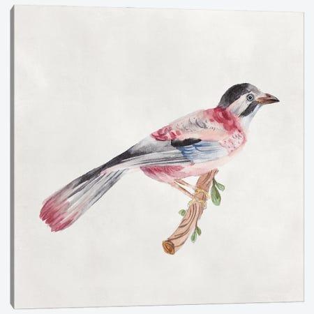 Bird Sketch I Canvas Print #WNG1296} by Melissa Wang Canvas Art
