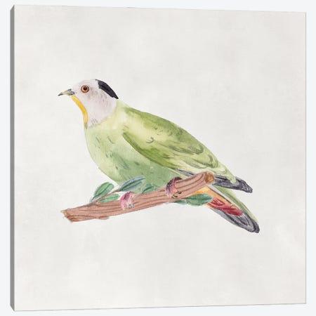 Bird Sketch III Canvas Print #WNG1298} by Melissa Wang Canvas Print