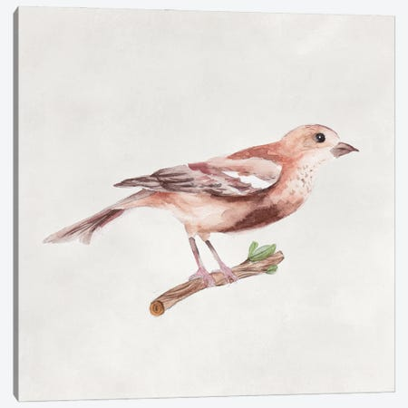 Bird Sketch IV Canvas Print #WNG1299} by Melissa Wang Canvas Art Print