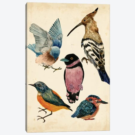 Bird Collection I Canvas Print #WNG129} by Melissa Wang Canvas Print