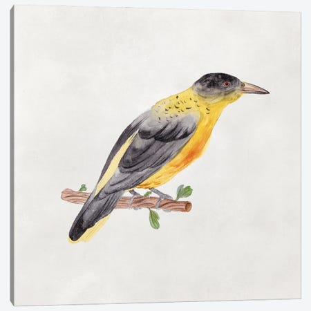 Bird Sketch VI Canvas Print #WNG1301} by Melissa Wang Canvas Art Print