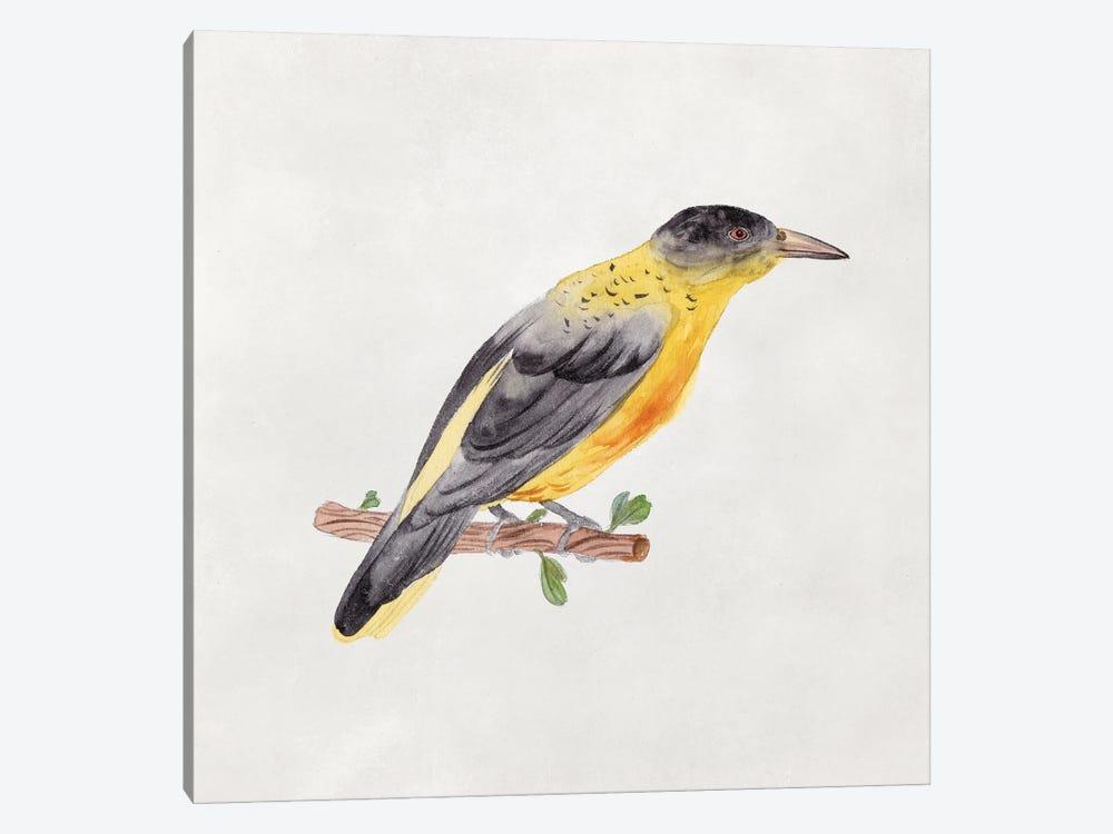 Bird Sketch VI by Melissa Wang 1-piece Canvas Wall Art