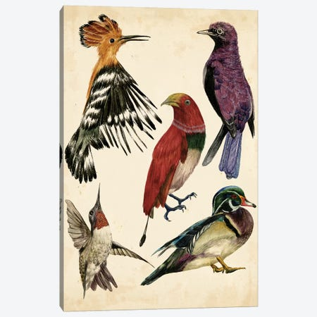 Bird Collection II Canvas Print #WNG130} by Melissa Wang Canvas Art
