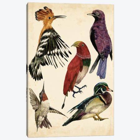 Bird Collection II Canvas Print #WNG130} by Melissa Wang Canvas Art