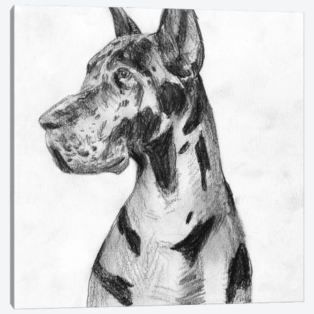 Great Dane Portrait I Canvas Print #WNG1314} by Melissa Wang Canvas Print