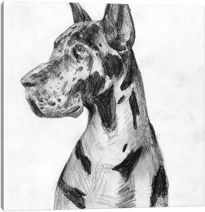 Great Dane Portrait I Canvas Art Print