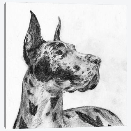 Great Dane Portrait II Canvas Print #WNG1315} by Melissa Wang Canvas Print