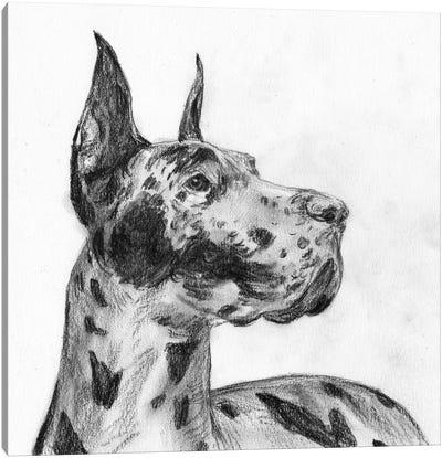 Great Dane Portrait II Canvas Art Print