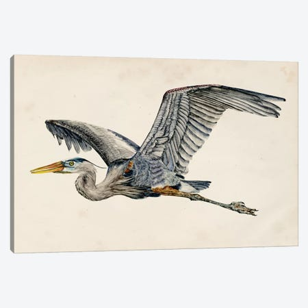 Blue Heron Rendering III Canvas Print #WNG131} by Melissa Wang Canvas Artwork