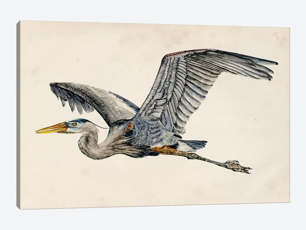 Blue Heron Rendering III by Melissa Wang 1-piece Canvas Artwork