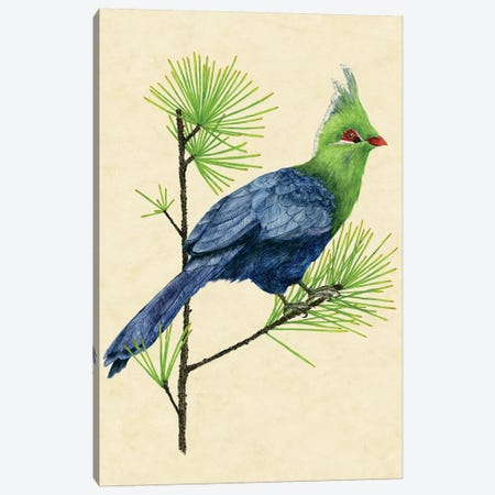 Green Turaco I Canvas Print #WNG139} by Melissa Wang Canvas Artwork