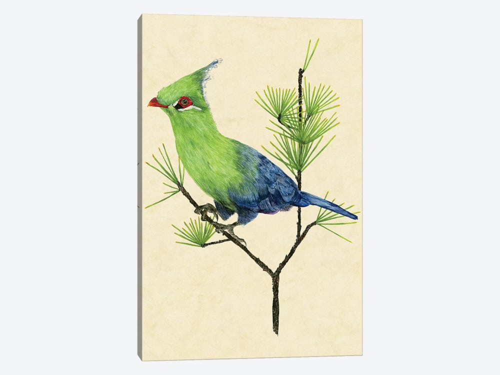 Green Turaco II by Melissa Wang 1-piece Canvas Art