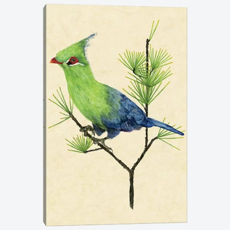Green Turaco II Canvas Print #WNG140} by Melissa Wang Canvas Art Print