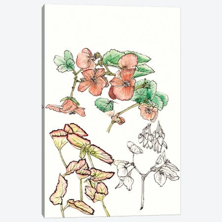 Begonia Study Canvas Print #WNG161} by Melissa Wang Art Print