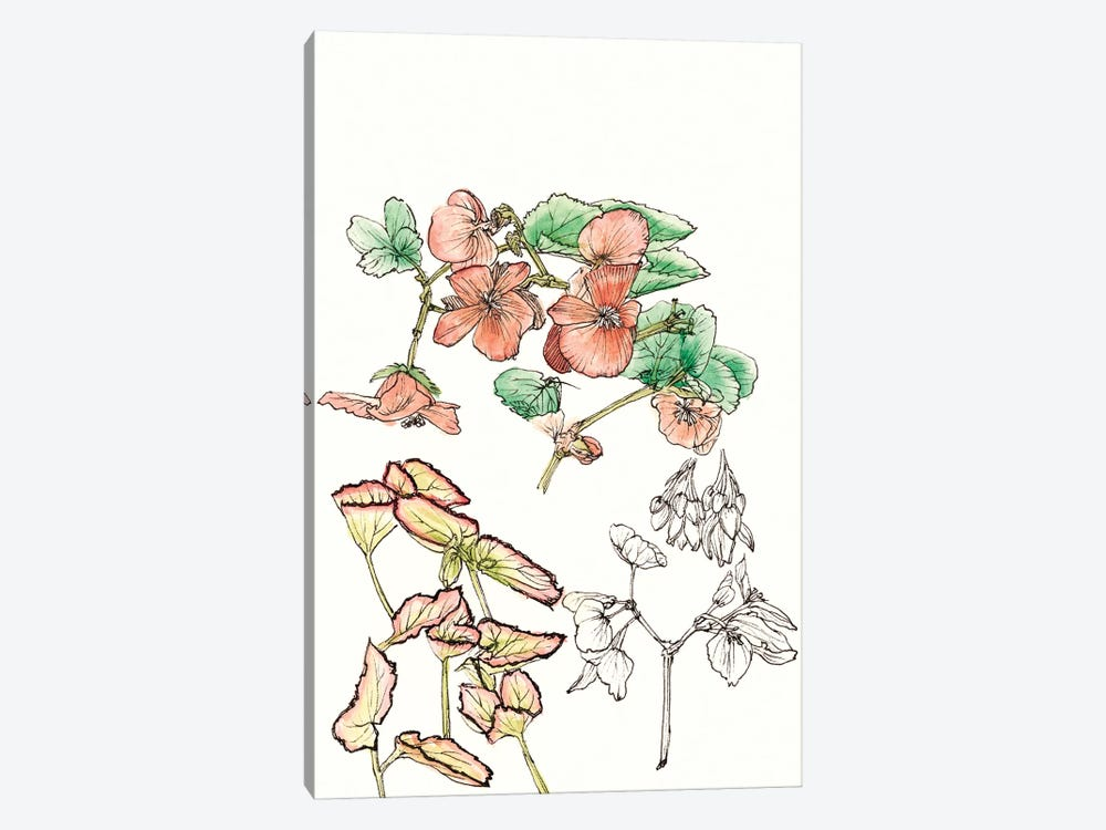 Begonia Study by Melissa Wang 1-piece Art Print