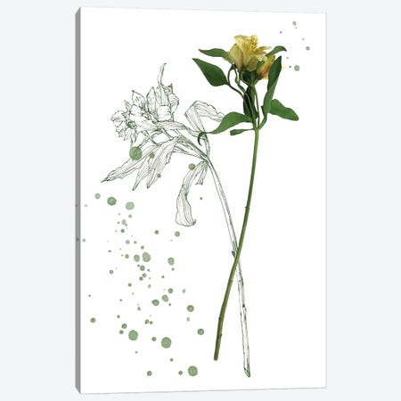 Botany Flower I Canvas Print #WNG166} by Melissa Wang Canvas Art