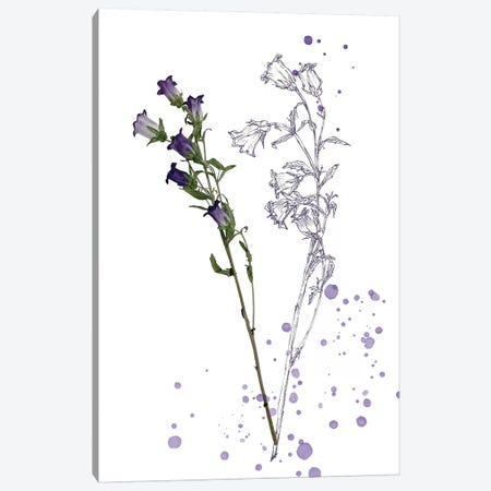 Botany Flower II Canvas Print #WNG167} by Melissa Wang Canvas Wall Art