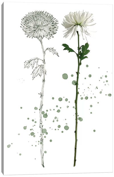 Botany Flower IV Canvas Art Print