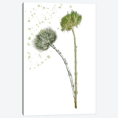 Botany Flower V Canvas Print #WNG170} by Melissa Wang Canvas Wall Art