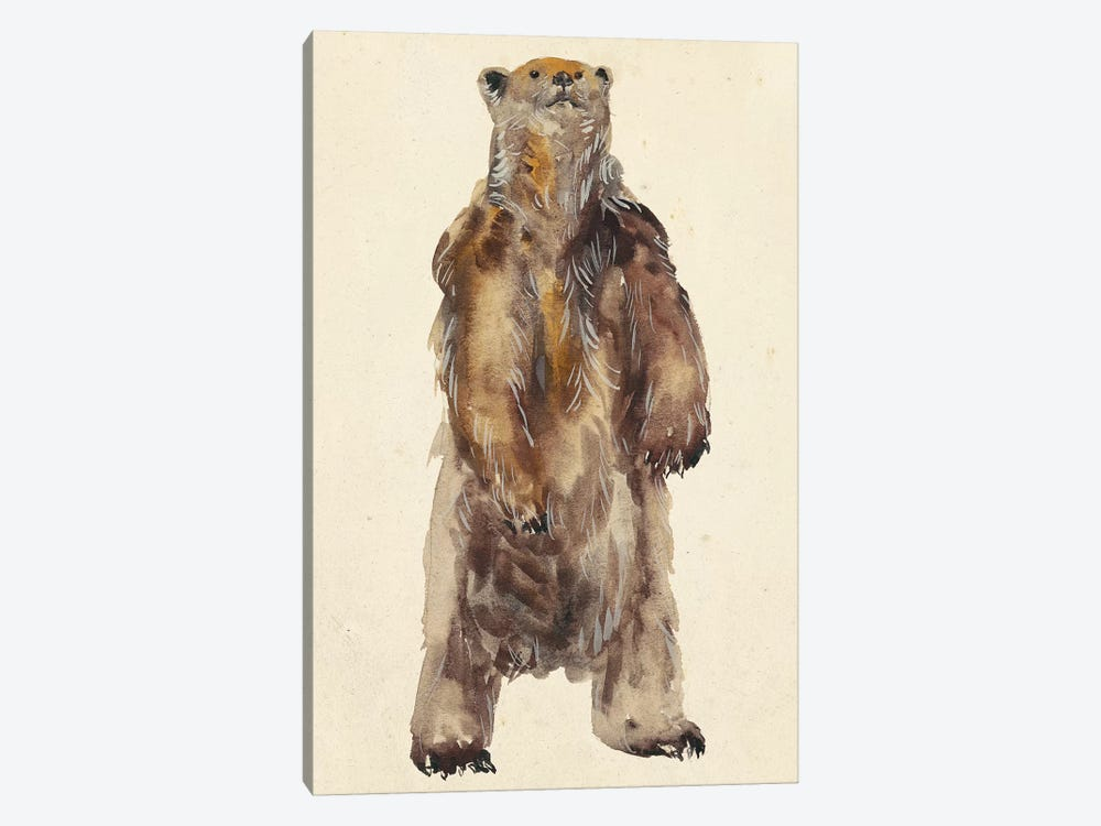 Brown Bear Stare I by Melissa Wang 1-piece Canvas Print
