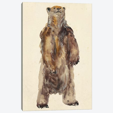 Brown Bear Stare I Canvas Print #WNG174} by Melissa Wang Canvas Print