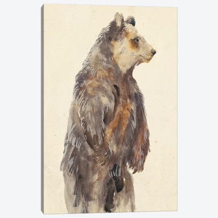 Brown Bear Stare II Canvas Print #WNG175} by Melissa Wang Art Print