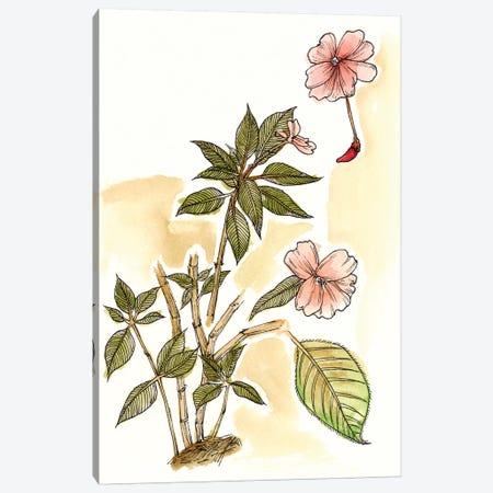 Impatiens Study Canvas Print #WNG209} by Melissa Wang Canvas Wall Art