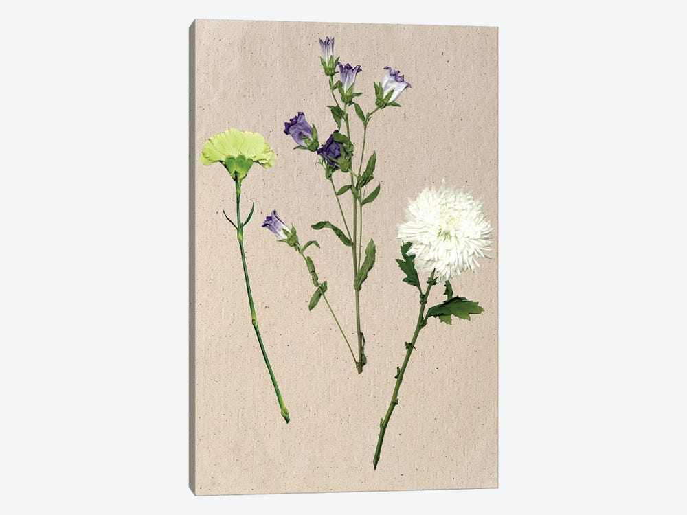 Pretty Pressed Flowers I by Melissa Wang 1-piece Canvas Wall Art