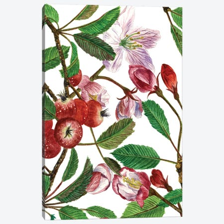 Malus Melliana I Canvas Print #WNG23} by Melissa Wang Art Print
