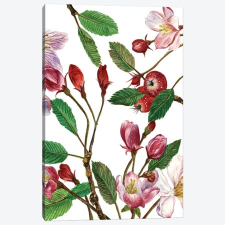 Malus Melliana II Canvas Print #WNG24} by Melissa Wang Canvas Artwork